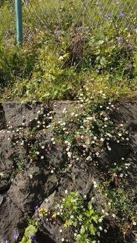 路端の花 - 鴎庵