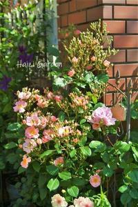 風(で)・・・立ちぬ(^_^;) - ハイジの玄関先ガーデン エピソード2♪