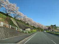 桜が綺麗....でしたw - 熊本の看板屋さん伊藤店舗企画のブログ☆ぶんぶん日記