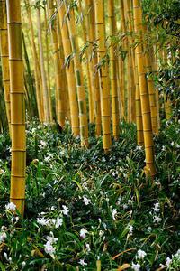 咲き急ぐ花達シャガ@京都市洛西竹林公園 - デジタルな鍛冶屋の写真歩記