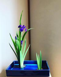 植物が変わっていく… - 自然を見つめて自分と向き合う心の花