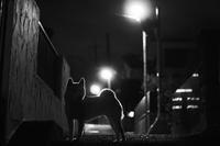 夜の散歩(3cut)sakura -     ~風に乗って~    Present