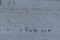 夏羽やら婚姻色やらの鳥たち @葛西臨海公園 - そらいろのパレット