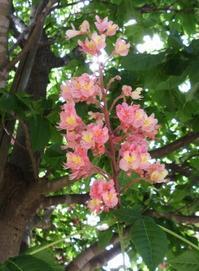 紅白の・・・ - Otono123's Blog