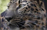 動物園とカメラと。sony α1の瞳AFがあれば動物の檻がナンボのもんじゃーい! #a1 #α1 #SEL70200GM 作例 - さいとうおりのお気に入りはカメラで。
