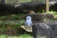 水浴び - 動物園へ行こう