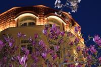 宝塚・花のみちのモクレン - ブルーアワーの街の情景