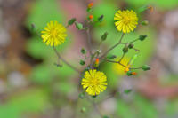 花の造形、、、アオゲラ、カイツブリ - 池のフォト遊び