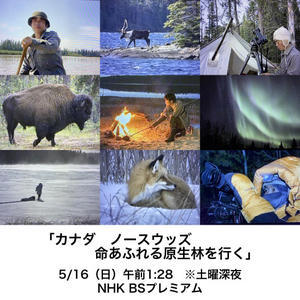 "NHK Interview & NHKBS ""WILDLIFE"" - hidehiro otake photography news                                      大竹英洋フォトグラフィー"