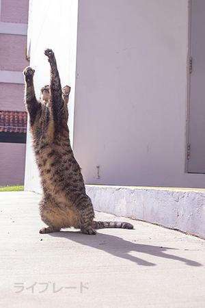 ご近所猫 2021.05.01 - Rayblade Photos