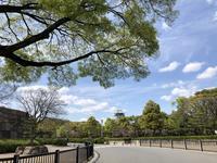 大阪城公園のサトザクラ - y's 通信 ~季節を彩る風物詩~