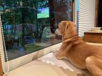 雷を待つ女 - 犬と楽しむスローライフ