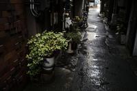 古町Nobody・・・に近い。20210503 - Yoshi-A の写真の楽しみ