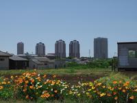 都市開発 - いや、だから 姉ちゃん じゃなくて ネイチャー・・・ その2
