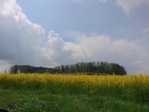 ヘルヴェティア備忘録―Suisse遊牧記
