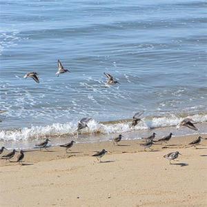 北帰行 - Beachcomber's Logbook