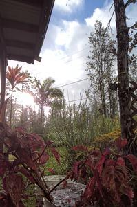 バケツに雨水 - Nature Care Hawaii