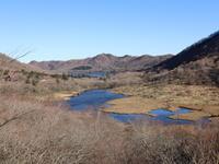 赤城山 アカヤシオ、シャクナゲも(1) (2021/5/2撮影) - toshiさんのお気楽ブログ