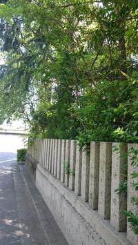 新緑の広島散歩 - Tea's  room  あっと Japan