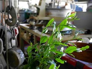 宇治市の茶園が年々少なくなる様子を何とか食い止めたい - 宇治茶  伝統新風 吉田勝治さんに聞く Ask Mr. Msaharu Yoshida who calls a new style in traditional Uji tea