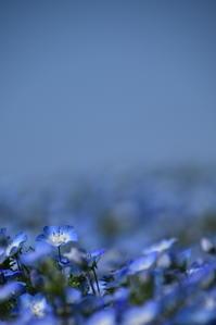 ブルーブルー♪ - 今日もカメラを手に・・・♪ part2