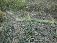 購入苗の植え付け - 自然農☆☆☆菜園日記