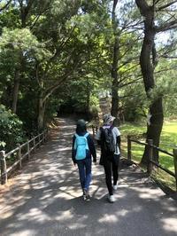 """県民の森へ。 - トキシンのイラストレーター的""""沖縄""""生活"""
