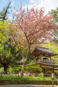 北鎌倉・浄智寺の春 - エーデルワイスブログ