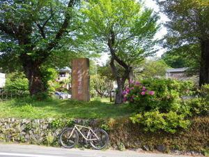 新緑の林道 -