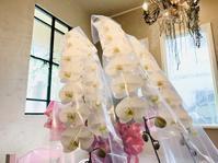 大輪の胡蝶蘭 - 名古屋の花屋BIANCA(SHUZO)のブログ