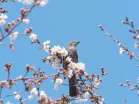 春の眺め - 節操のない写真館