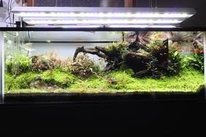 120センチ水槽のニューラージパールグラスが盛り盛りになってきました。【YouTube更新】 - 癒しのアクアライフ