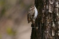 GW某日。某野鳥の森で嫌味を言った足立ナンバーのジジィ(笑) - Olive Drab