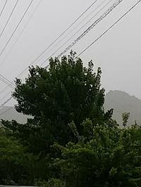 今日は雨 - hanasdiary.exblog.jp