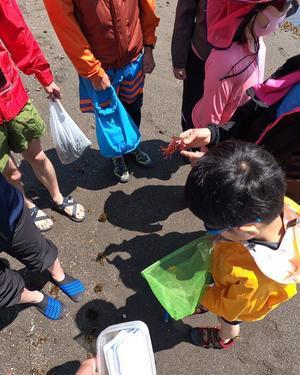 葉山の海で遊ぶ - 環境応援団いっぽ NAO'sblog 「foot prints」
