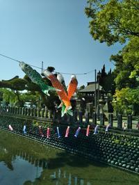 鯉のぼり - 福岡おでかけと食日記