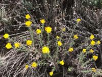キャニオンに咲く花々 - やせっぽちソプラノのキッチン2