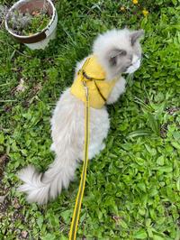 猫様色々 - 土筆の庭