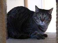 猫のお留守番 ソルくん編。 - ゆきねこ猫家族