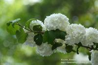 観音山ウォーク#2白衣観音 - 風の彩りー3