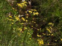 赤名湿地 - 清治の花便り