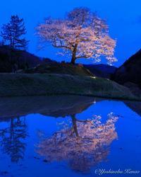 神宮寺跡のエドヒガンザクラ - 写真ブログ「四季の詩」