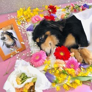 お犬くんのお葬儀。 - MyWorld is