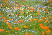 そしてお花畑へ♪ - 今日もカメラを手に・・・♪ part2