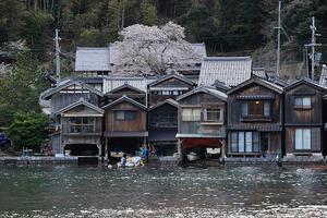 舟屋に咲く一本桜 - 京都写真(Kyoto Photo)