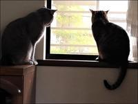 人流に違和感を覚えるor覚えない?……&今日も猫たちは全員揃いました - クロのこと・そして猫たちのこと~猫と共に老いを生きる~