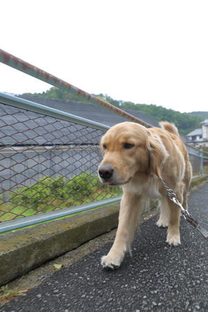 托鉢♪ - ハナ&ララとお散歩!