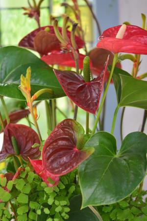 観葉植物の魅力? - 薔薇好き花好き庭が好き?元英国在住・アートセラピストが造る癒しの庭