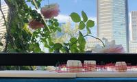noanoa garden - noanoa laboratory