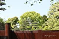 新緑が美しく広がる足立区の桜花亭! - 一場の写真 / 足立区リフォーム館・頑張る会社ブログ